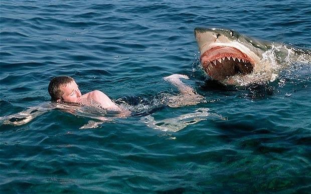 Photo of Kalau Kena Serang Dengan Ikan Jerung, Nak Buat Apa?