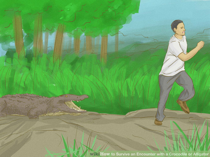 aid44647-728px-survive-an-encounter-with-a-crocodile-or-alligator-step-14