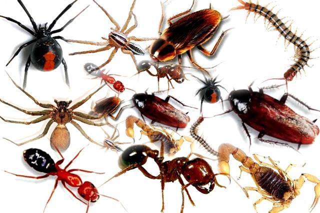 Photo of 5 Perkara Yang Anda Perlu Tahu Tentang Gigitan Serangga