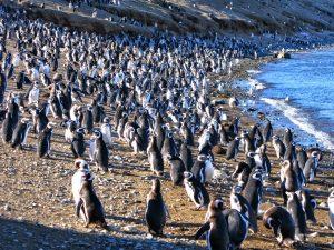 Los Pingüinos Natural Monument (Imej Kredit: 5five5)