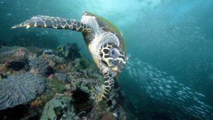 Nikmati keindahan haiwan marin di dasar laut (Imej Kredit: CoolGreenScience)