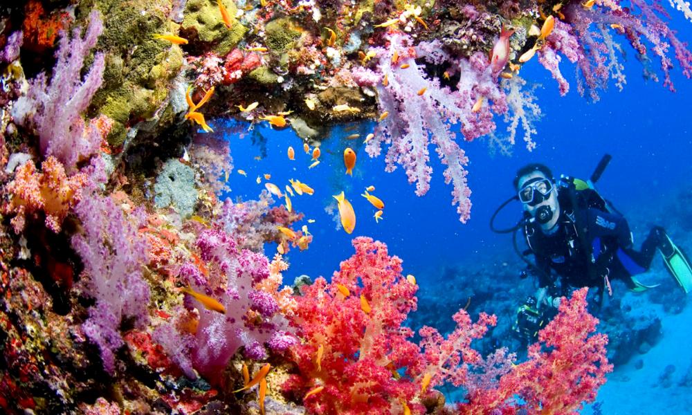 Photo of 7 Tempat Diving Terbaik Di Asia Tapi Di Manakah Syurga Laut Itu? Terokainya disini !