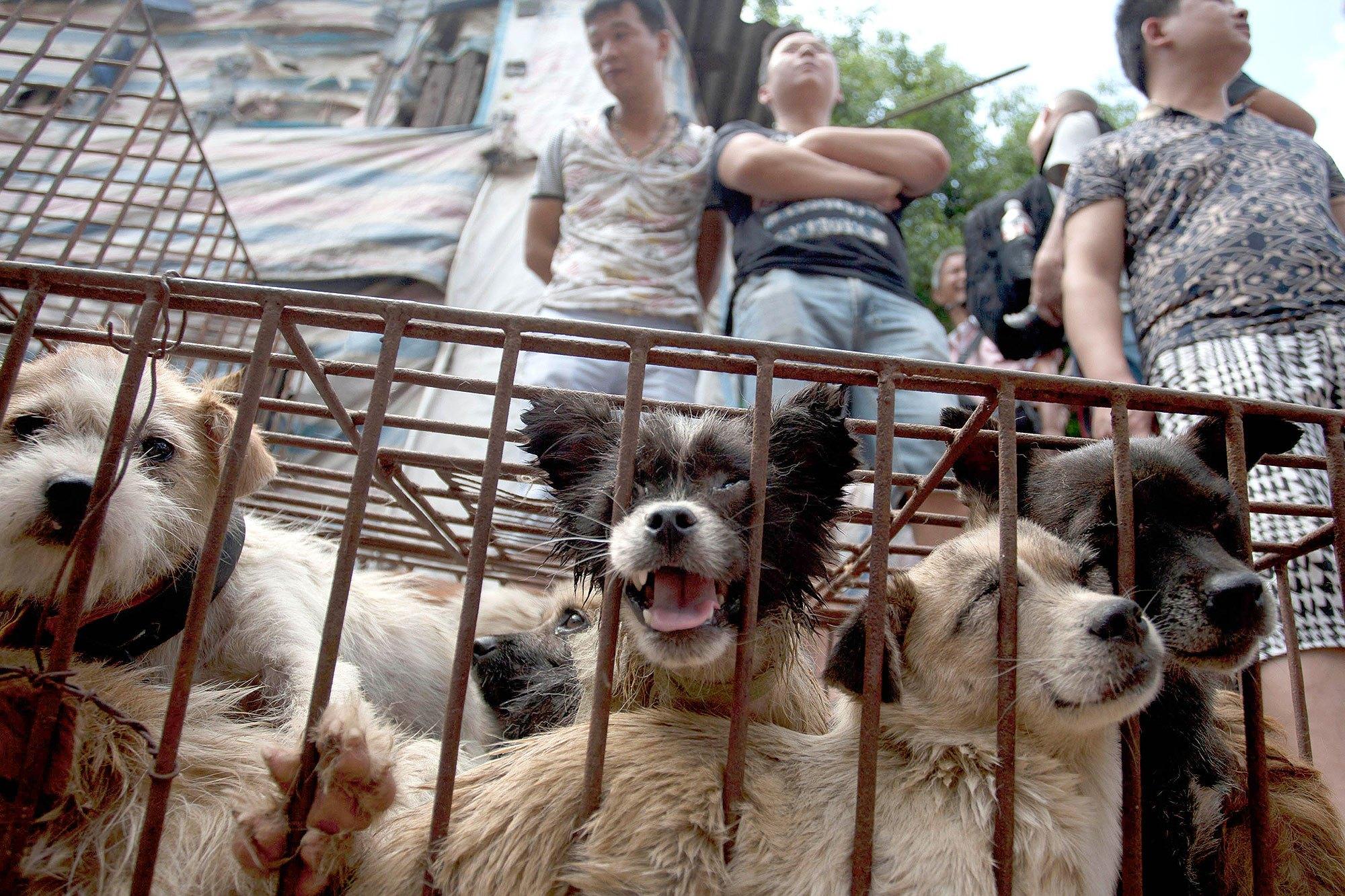 Photo of Pengharaman Penjualan Daging Anjing Di Festival Yulin Dog Meat, China