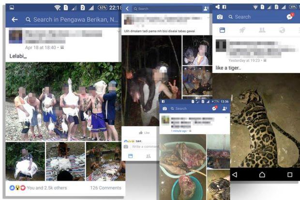 Photo of Gambar Pemburuan Spesies Terancam di FB Cetus Kemarahan