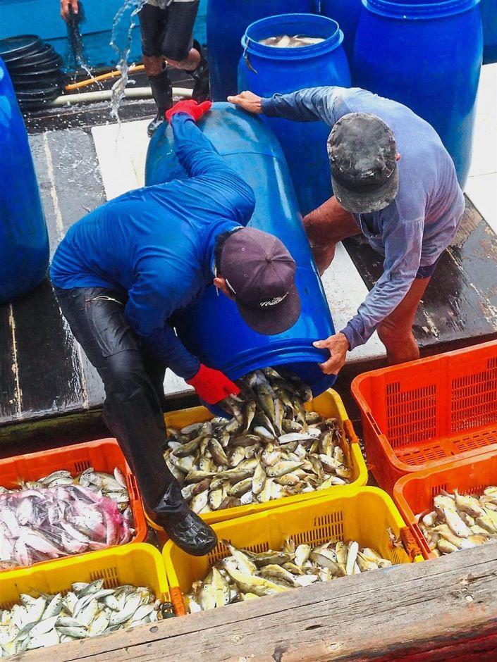 Photo of Penjualan Ikan Buntal Akan Diharamkan Tidak Lama Lagi