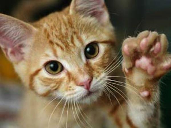 Photo of Cat Welfare Society Singapura Mendidik Orang Ramai Tentang Penjagaan Kucing