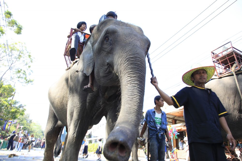 Photo of Kekejaman Terhadap Gajah Dalam Industri Pelancongan