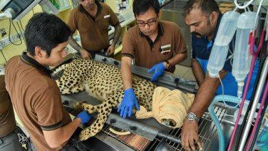 Photo of Penjagaan Kesihatan Haiwan 'Warga Emas' Di Singapura