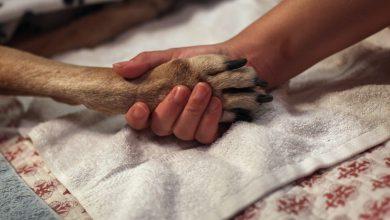 Photo of Kajian: Manusia Lebih Bersimpati Terhadap Anjing