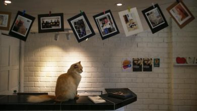 Photo of Catzonia: Hotel 5 Bintang Pertama Untuk Si Comel