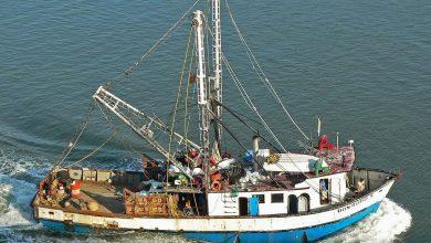Photo of Mana Pergi Hasil Tangkapan Ikan Di Perairan Malaysia?