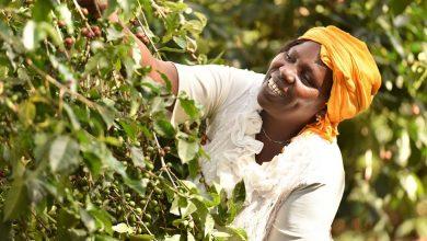 Photo of Perdagangan Adil Bantu Tingkatkan Taraf Hidup Petani