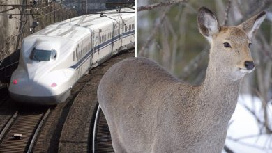 Photo of Mengapa Bunyi Haiwan Dipasang Pada Kereta Api?