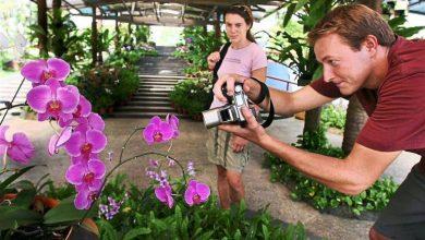 Photo of 5 Tempat Di Malaysia Untuk Menikmati Keindahan Bunga-Bungaan