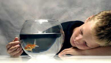 Photo of Ikan Tidak Menyebabkan Autisme