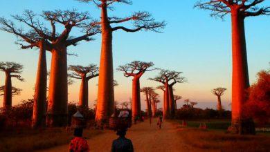 Photo of Islam Di Madagascar: Kesucian Agama Di Kepulauan Yang Indah