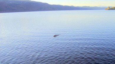 Photo of Seorang Saintis Sedang Mencari DNA Raksasa Loch Ness