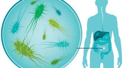 Photo of Obesiti Mungkin Boleh Dirawat Menggunakan Bakteria Usus