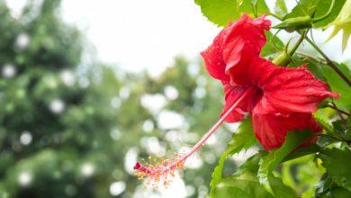 Photo of 6 Produk Kecantikan Yang Menggunakan Bunga Raya