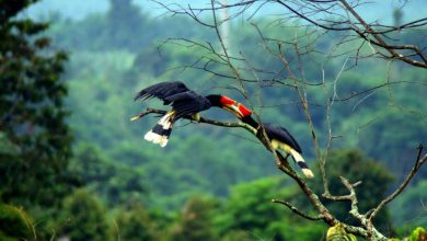 Photo of Sarawak Antara Destinasi Percutian Musim Panas Terbaik
