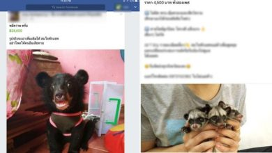 Photo of Thailand's Rare Animal Trade Exposed On Facebook