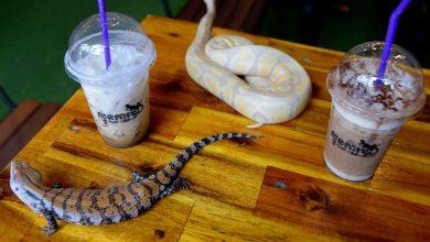 Photo of Minum Bersama Haiwan Eksotik di Kafe Reptilia