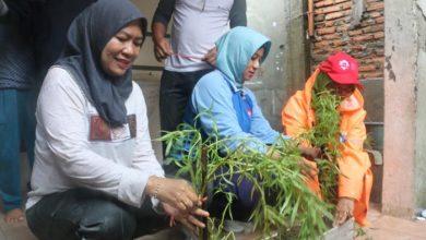 Photo of Perang Denggi Secara Semulajadi Warga Jakarta Utara Patut Dicontohi Semua