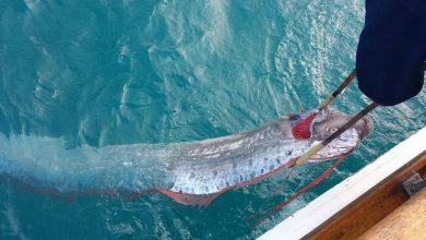 Photo of Kemunculan Ikan Dayung, Rakyat Jepun Waspada Terhadap Tsunami