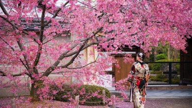 Photo of Teknik Meramal Musim Bunga Sakura di Jepun