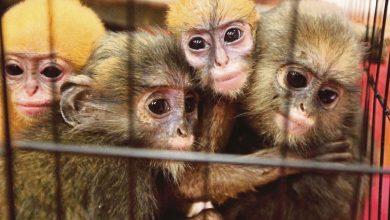Photo of Pemburu Haiwan Eksotik Perlu Dihukum Dengan Memakai Alat Pengesan Elektronik!