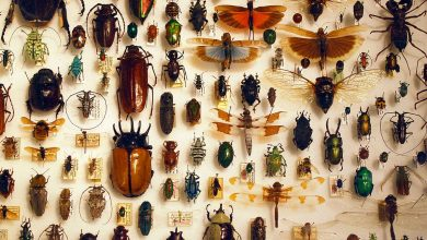Photo of Lenyapnya Serangga Di Muka Bumi Bakal Membawa Padah Kepada Manusia?