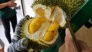 Photo of Adakah Baka Baharu Durian Dari Johor Ini Bakal Setaraf Dengan Durian Musang King?