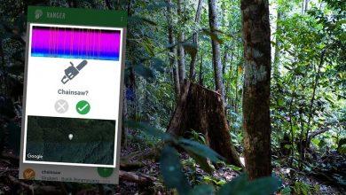 Photo of Kini Anda Boleh Mendengar Secara Langsung Suara Dari Dalam Hutan Melalui Aplikasi Telefon