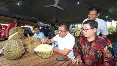 Photo of Melaka Sudah Memiliki 'Musang King'nya Tersendiri. Ada Yang Dah Cuba?