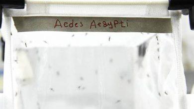 Photo of Wow! Kajian Tentang Nyamuk Di Malaysia Sudah Bermula Sejak Tahun 1908!