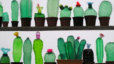 Photo of Adakah Kaktus Dapat Menyelesaikan Masalah Plastik Dunia?