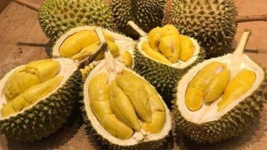 Photo of Singapura: Di Mana Durian Tidak Dialu-Alukan