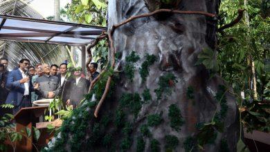 Photo of Mengapa Pokok Merbau Dipilih Sebagai Pokok Kebangsaan Malaysia?
