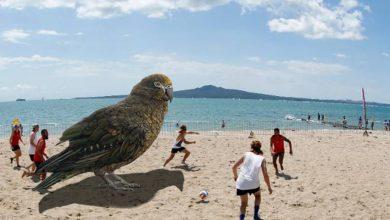 Photo of Rangka Burung Kakak Tua Gergasi Ditemui Di New Zealand