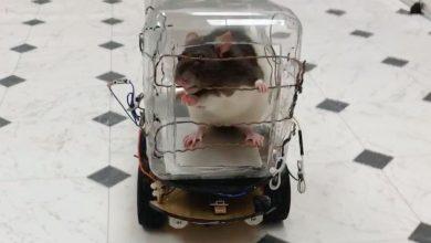 Photo of Tikus Lebih Tenang Apabila Memandu Kereta, Bagaimana Pula Anda?