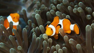 Photo of Tolong! 'Finding Nemo' Bakal Benar-Benar Hilang