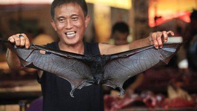 Photo of Tidak Takut Dengan Koronavirus, Hidangan Kelawar Masih Popular Di Indonesia