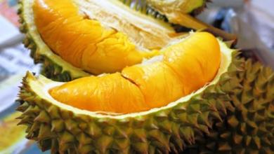 Photo of Kerajaan Negeri Mahu Penanam Durian Haram Tampil Untuk Bekerjasama