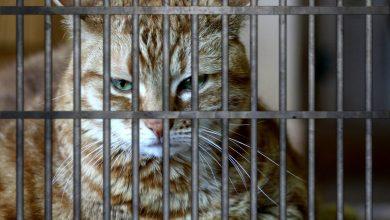 Photo of Kucing Pengedar Dadah Terlepas Dari Penjara Sri Lanka