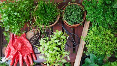 Photo of 5 Cara Efektif Untuk DIY Baja Tanaman Di Rumah